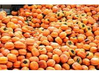 房山磨盘柿