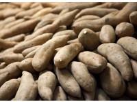 大化白玉薯