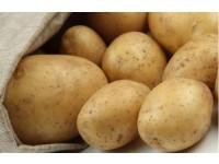 张北马铃薯