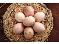 钟祥长寿村鸡蛋