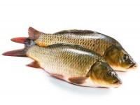 辰溪稻花鱼