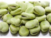 海门大白皮蚕豆