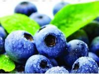 长白山蓝莓