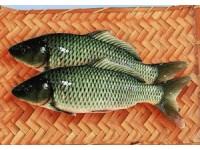 东平湖鲤鱼